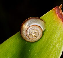 Snail on Snake plant by Douglas Stetner