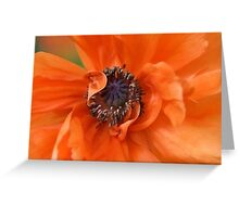 Untitled Greeting Card