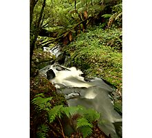 Rushing Waters,Triplet Falls,Otway's Photographic Print