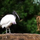 IBIS by Mark Baker