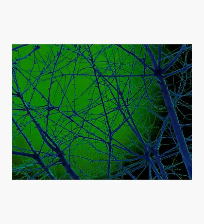 Colorful Blue and Green Bough Design Photographic Print