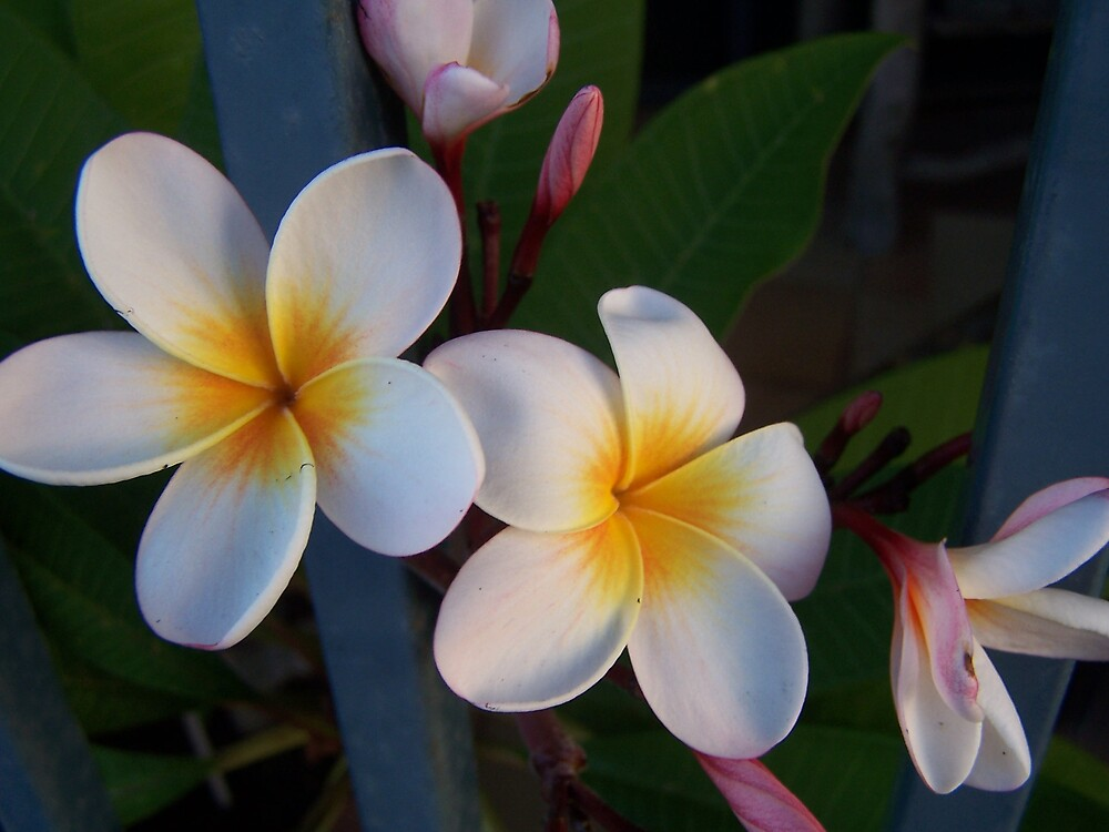 floral by Princessbren2006