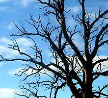 Tree by DeeCeeDee