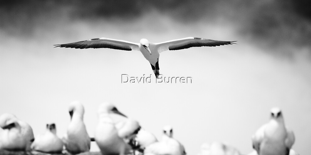 Infrared approach by David Burren