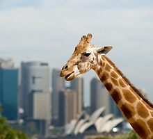 Giraffe in the Big Smoke by Craig Goldsmith