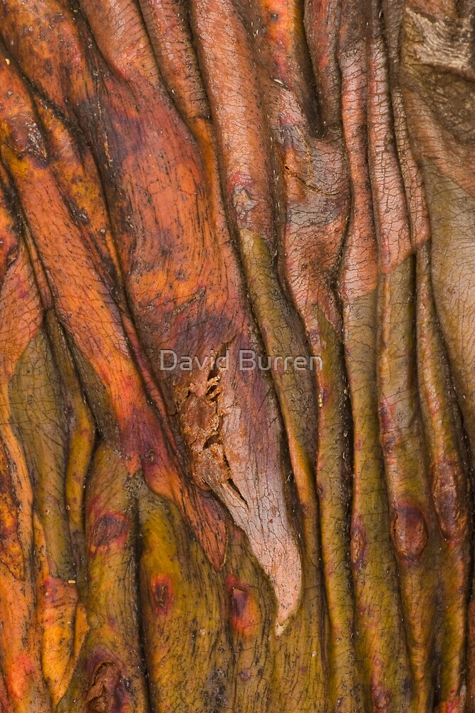 Snowgum patterns by David Burren