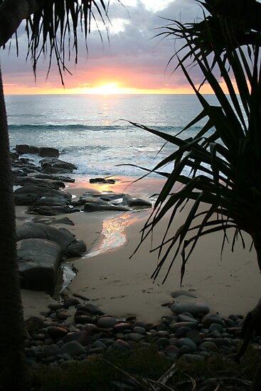 sunrise by Tricia  Fox