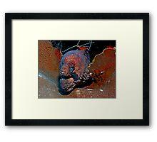 Moray 1 Framed Print