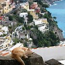 Cat Nap by David Sundstrom