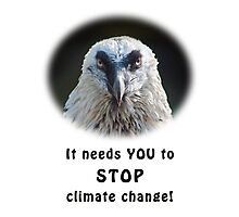 Bearded Vulture against climate change Photographic Print