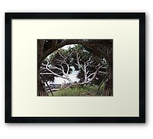 Pandanus on Pandanus Framed Print