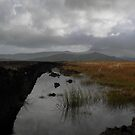 Old waterlogged Irish Bog  by Donny Ocleirgh
