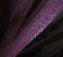 Purple Jewels by Samantha Cole-Surjan