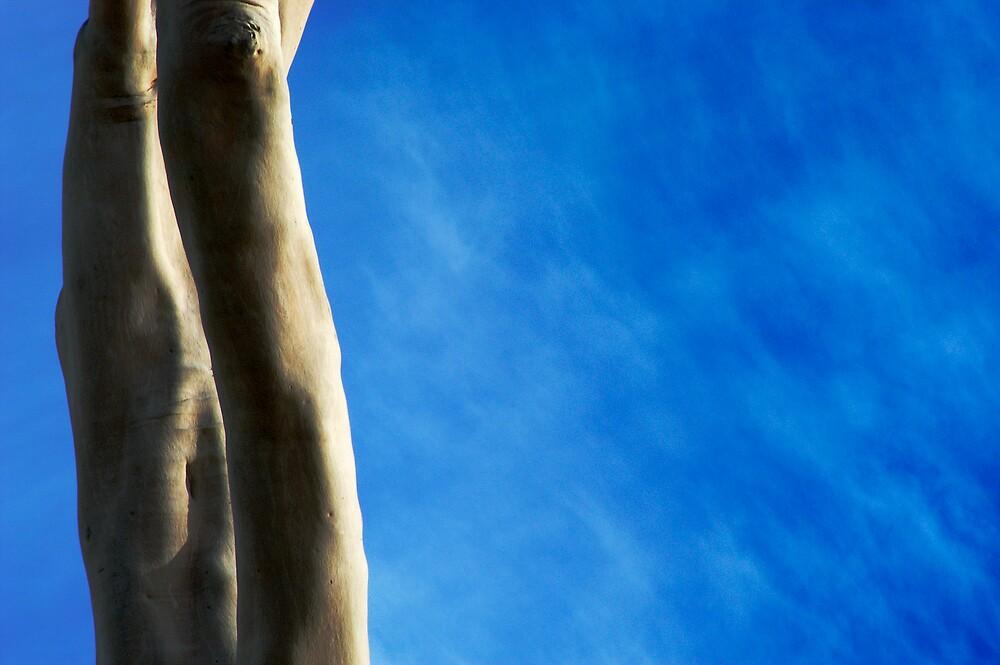 Eucalypt Trunks by John Barratt