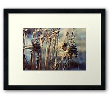Little Presents - JUSTART © Framed Print