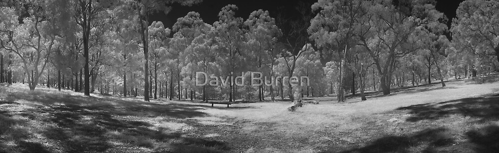 Wattle Park in infrared by David Burren