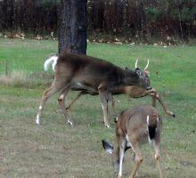 Deer Disturbance by vigor