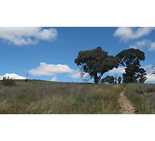 Dead Grass and Trees Photographic Print