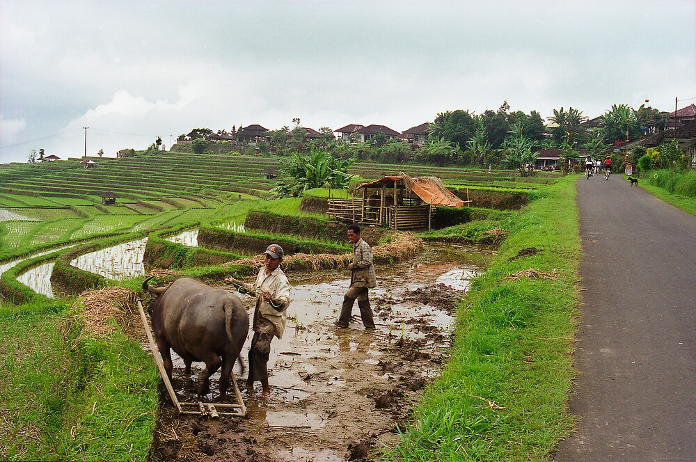 Farmers by Rohan