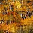 Shades of Gold by aussiedi