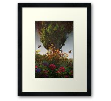 lombardy cypress in tuscany Framed Print