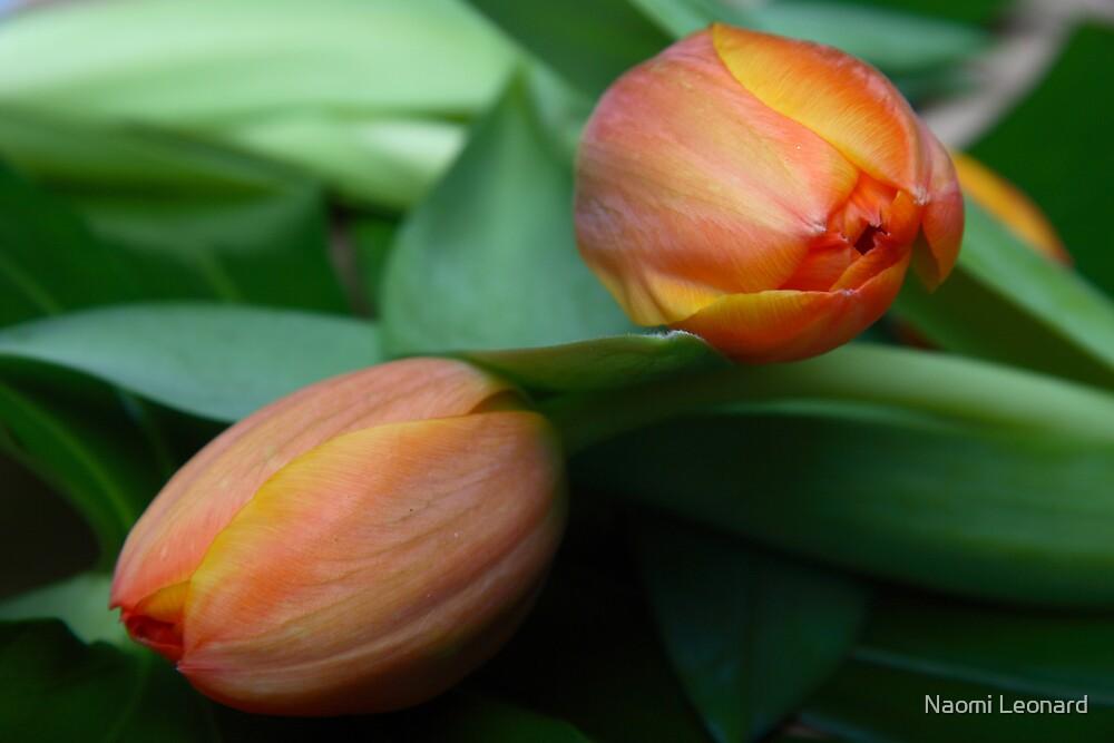 Tulips  by Naomi Leonard