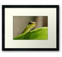 """""""Peeping"""" Tree Snake Framed Print"""