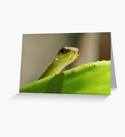 """""""Peeping"""" Tree Snake Greeting Card"""