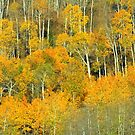 Trees of Gold by aussiedi