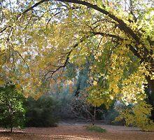 Sunlit Autumn by azcactusd