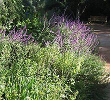 Purple flowers by azcactusd