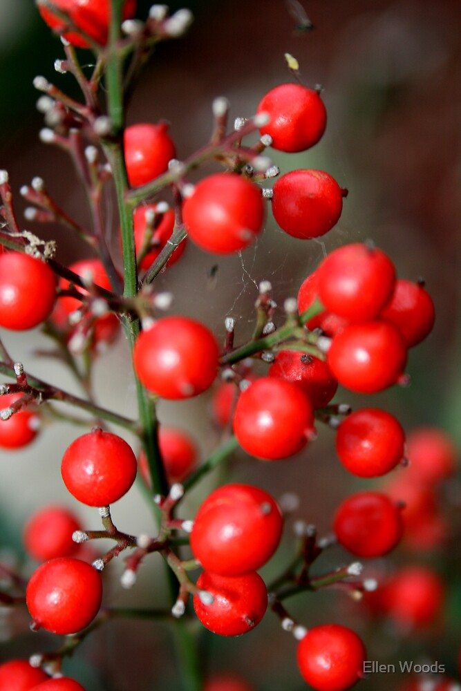 Nandina Berries by Ellen Woods