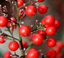 Nandina Berries by Ellen Woods