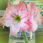 Pink Amaryllis Lillies Vase by Rupasha Rampersad