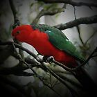 KING PARROT I by hugo