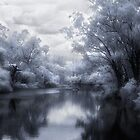 IR Dreaming by Jenni Horsnell