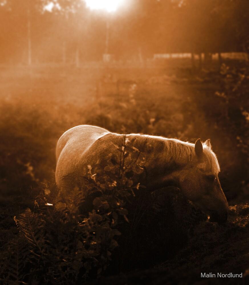 fairytale horse by Malin Nordlund