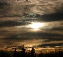 White Spruce by trentspot