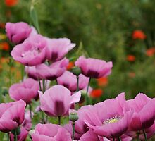 A River of Pink by David Bridle