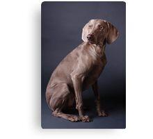 Weimaraner Gundog Dog Items Canvas Print