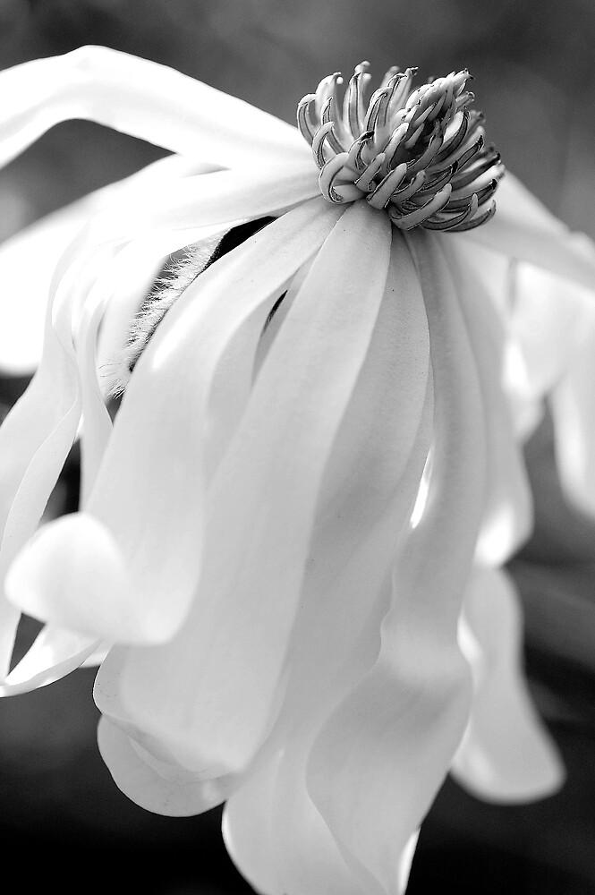 petal by Katie101