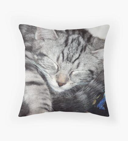 Kitten Close up, sleeping Throw Pillow