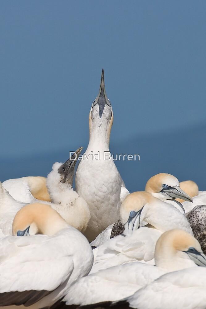 After feeding by David Burren