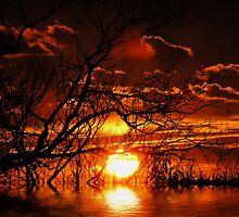 summer sunrealism by webgrrl
