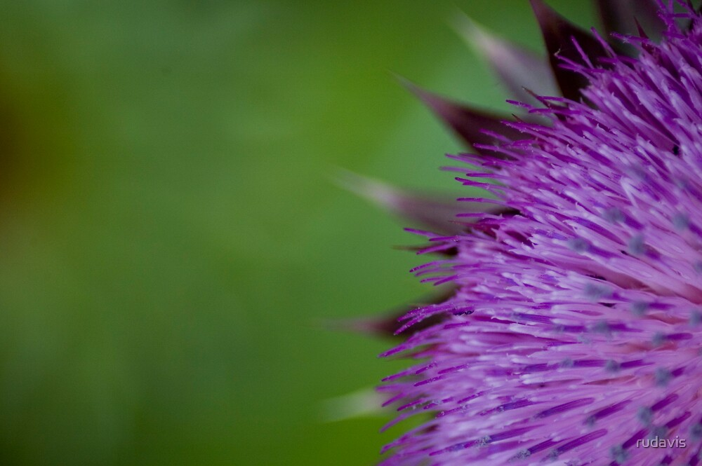 Purple Flower by rudavis