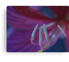 Pink Two Canvas Print