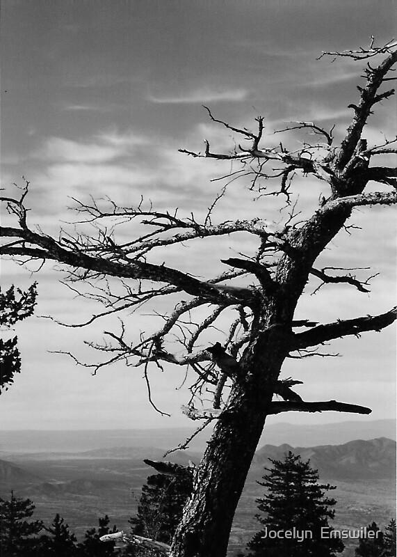 Tree by Jocelyn  Emswiler
