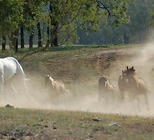 Galloping horses by maromedia