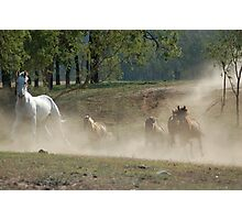 Galloping horses Photographic Print