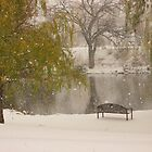 Winter at the duck pond - Colorado Springs by dfrahm